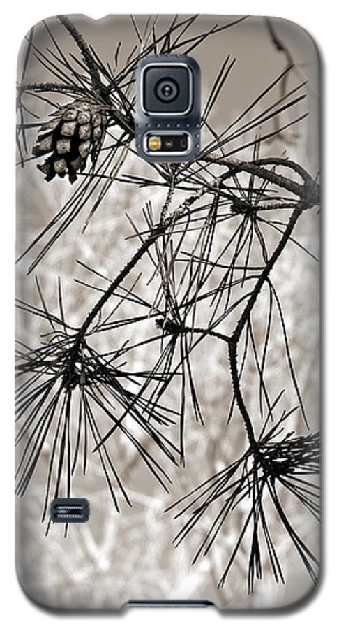 Tree Galaxy S5 Case featuring the photograph Needles Everywhere by Marilyn Hunt