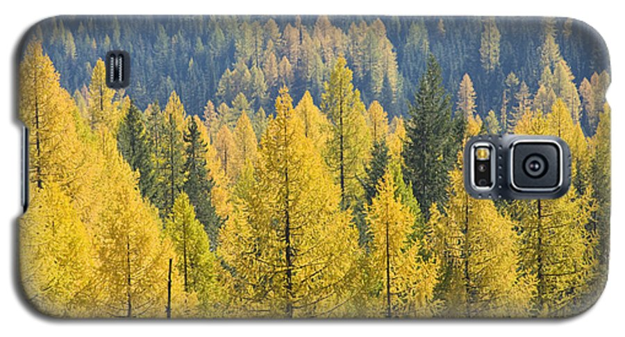 Trees Galaxy S5 Case featuring the photograph North Idaho Gold by Idaho Scenic Images Linda Lantzy