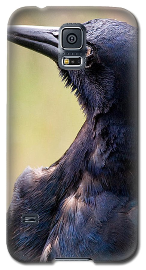 Bird Galaxy S5 Case featuring the photograph On Alert by Christopher Holmes