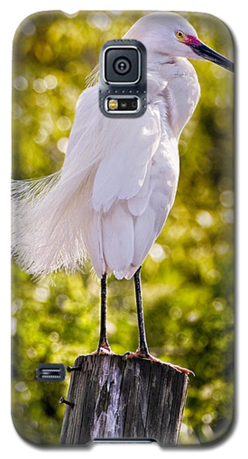 snowy Egret Galaxy S5 Case featuring the photograph On Watch by Christopher Holmes