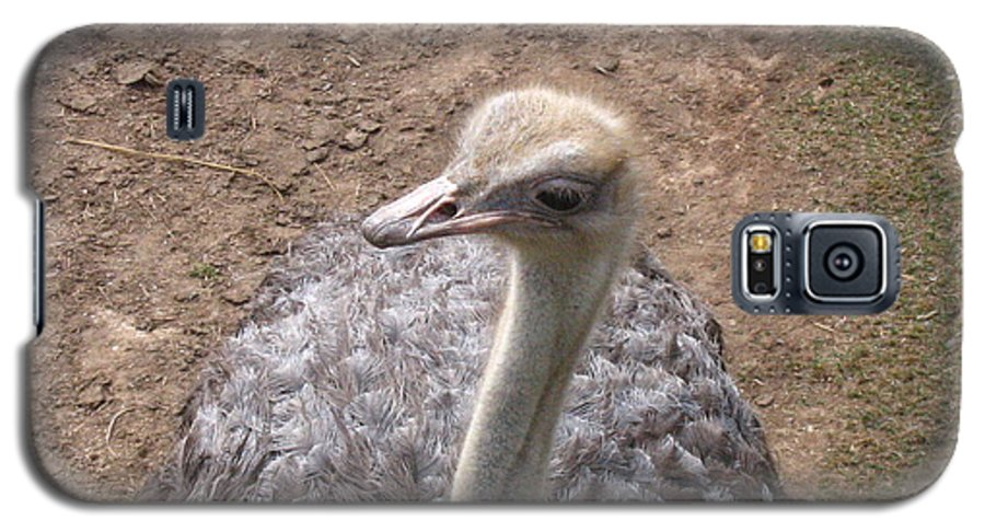 Ostrich Galaxy S5 Case featuring the photograph Ostrich by Melissa Parks