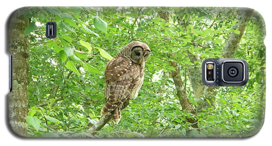 Owl Galaxy S5 Case featuring the photograph Owl II by Kathy Schumann