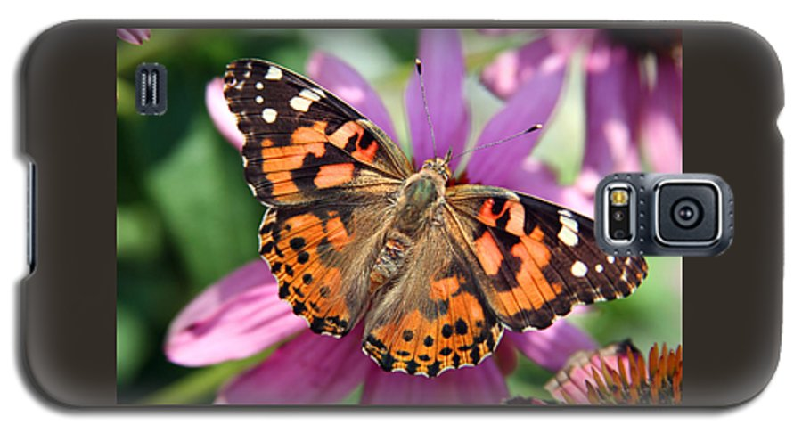 Painted Lady Galaxy S5 Case featuring the photograph Painted Lady Butterfly by Margie Wildblood