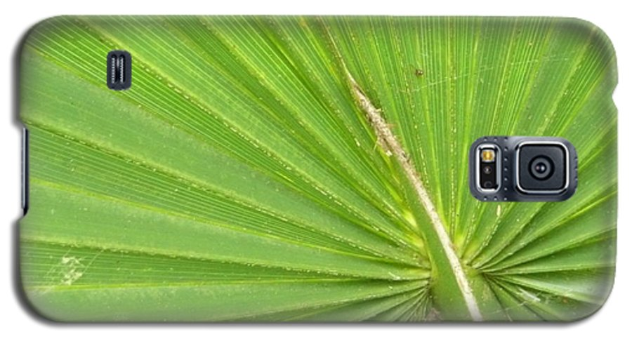 Palmetto Galaxy S5 Case featuring the photograph Palmetto II by Kathy Schumann