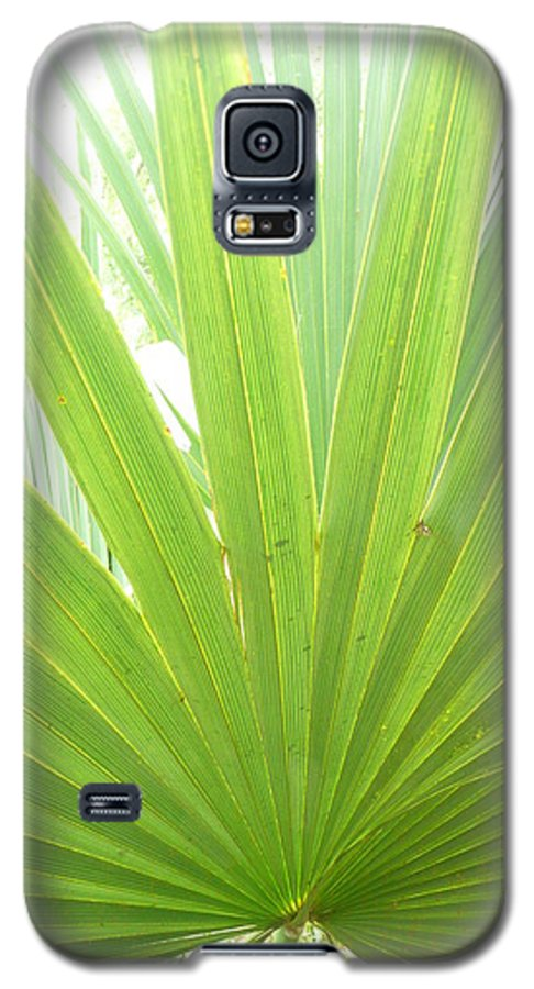 Green Galaxy S5 Case featuring the photograph Palmetto by Kathy Schumann
