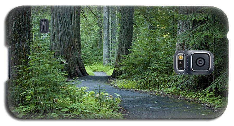 Grove Galaxy S5 Case featuring the photograph Path Through The Cedars by Idaho Scenic Images Linda Lantzy