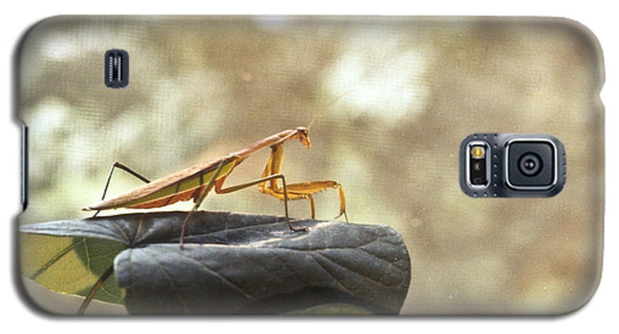 Praying Galaxy S5 Case featuring the photograph Pensive Mantis by Douglas Barnett