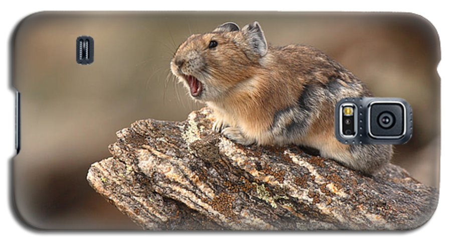Pika Galaxy S5 Case featuring the photograph Pika Barking From Rocktop Perch by Max Allen
