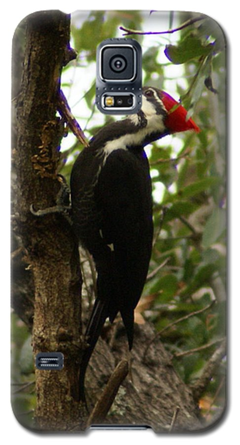 Bird Galaxy S5 Case featuring the painting Pileated Woodpecker by Debbie May