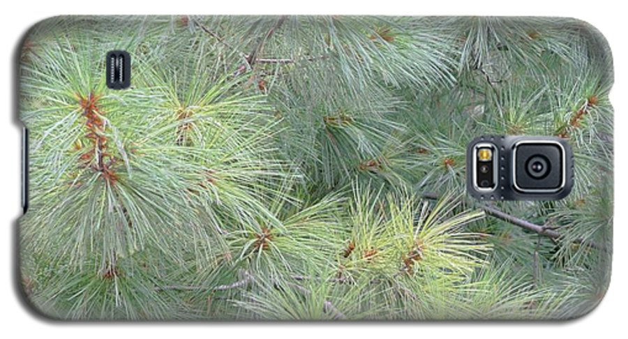 Pines Galaxy S5 Case featuring the photograph Pines by Rhonda Barrett