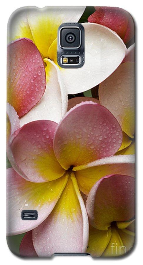 Pink Frangipani Galaxy S5 Case featuring the photograph Pink Frangipani by Avalon Fine Art Photography