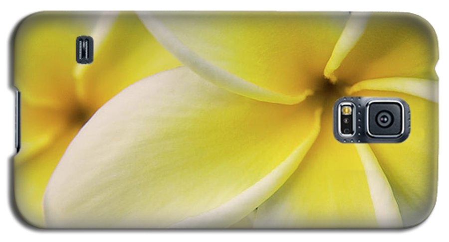 Nature Galaxy S5 Case featuring the photograph Plumeria Flowers by Julia Hiebaum