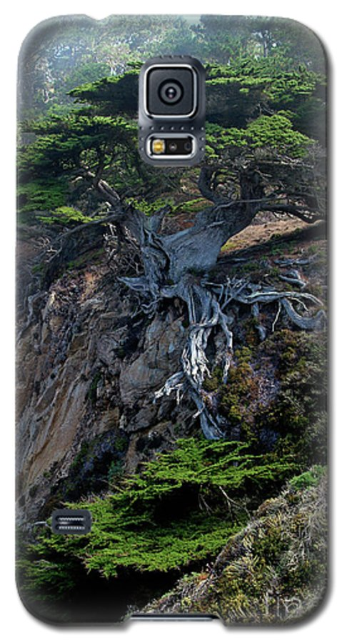Landscape Galaxy S5 Case featuring the photograph Point Lobos Veteran Cypress Tree by Charlene Mitchell