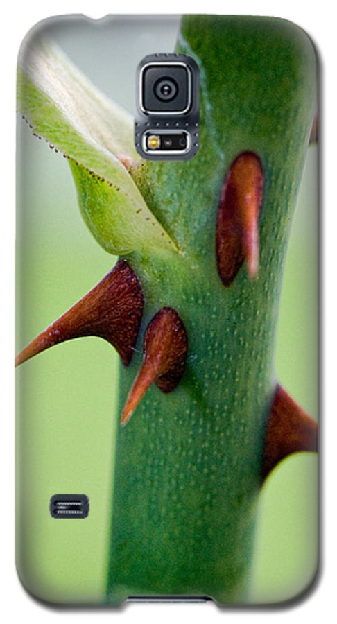 Thorns Galaxy S5 Case featuring the photograph Pointed Personality by Christopher Holmes