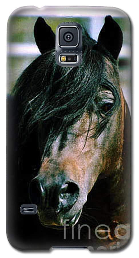 Horse Galaxy S5 Case featuring the photograph Portrait Of His Majesty - The King by Kathy McClure