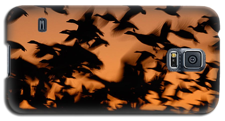 Geese Galaxy S5 Case featuring the photograph Pre-dawn Flight Of Snow Geese Flock by Max Allen