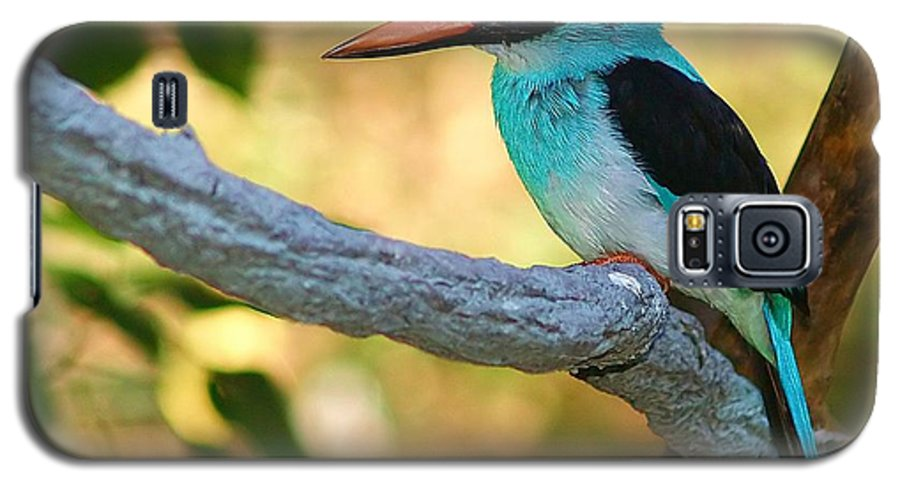 Kingfisher Galaxy S5 Case featuring the photograph Pretty Bird by Gaby Swanson