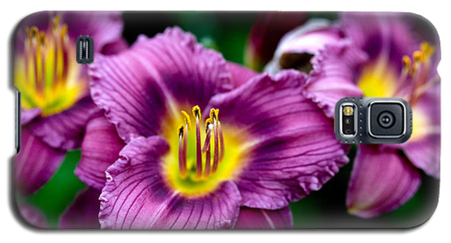 Flower Galaxy S5 Case featuring the photograph Purple Day Lillies by Marilyn Hunt