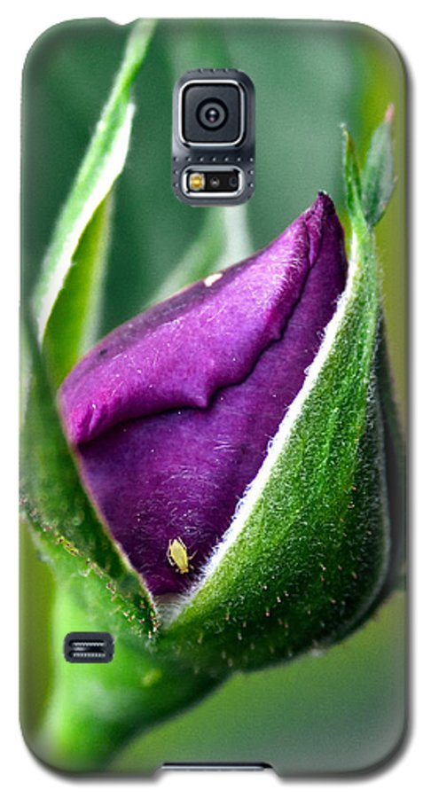 Rose Galaxy S5 Case featuring the photograph Purple Rose Bud by Christopher Holmes