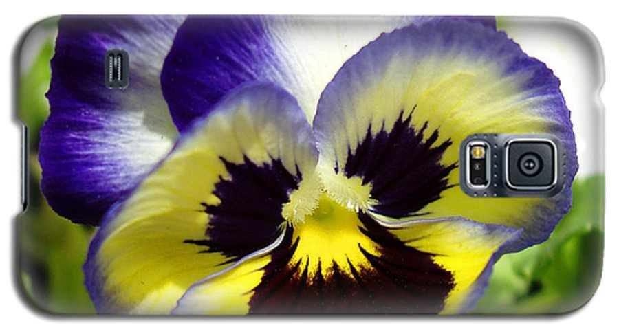 Pansy Galaxy S5 Case featuring the photograph Purple White And Yellow Pansy by Nancy Mueller
