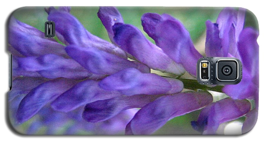 Flower Galaxy S5 Case featuring the photograph Purple Wildflower by Melissa Parks