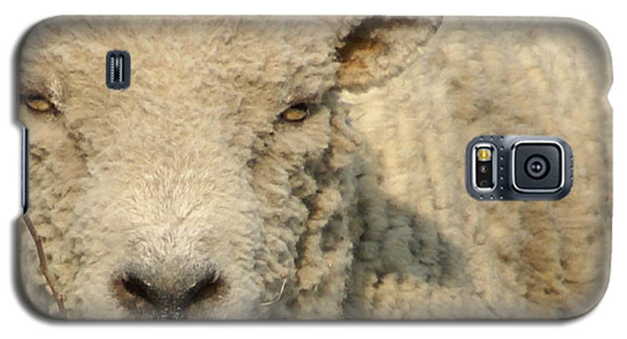Farm Animal Galaxy S5 Case featuring the photograph Ramsy - Debbie-may by Debbie May