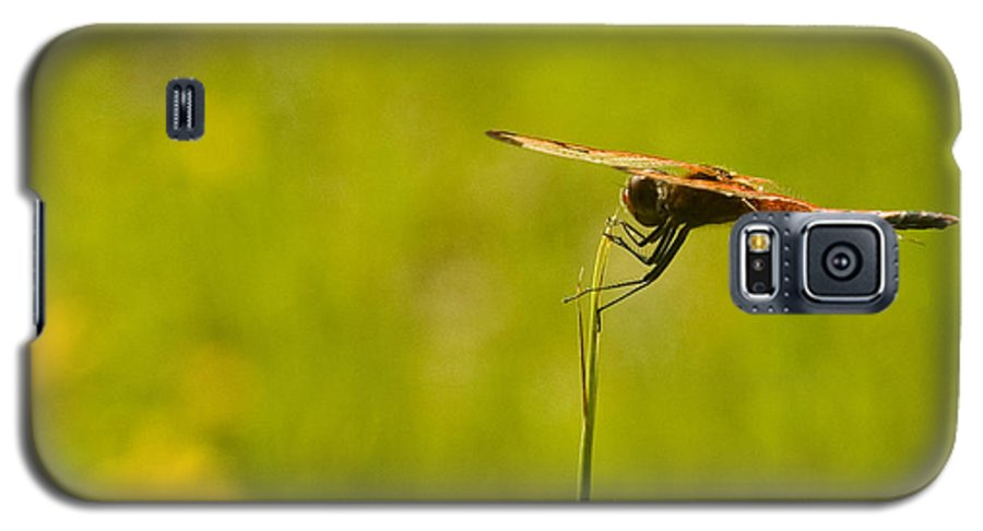 Dragonfly Galaxy S5 Case featuring the photograph Ready For Flight by Douglas Barnett
