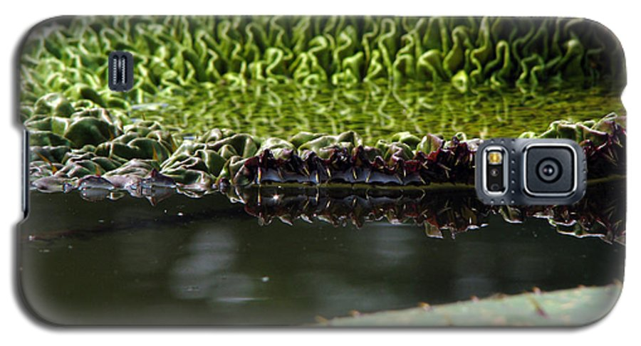 Lillypad Galaxy S5 Case featuring the photograph Ready To Spread by Amanda Barcon