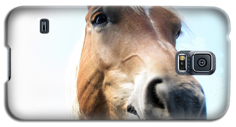 Horse Galaxy S5 Case featuring the photograph Really by Amanda Barcon
