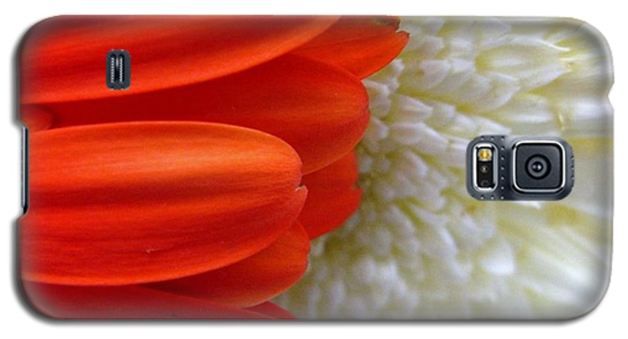 Flowers Galaxy S5 Case featuring the photograph Red And White by Rhonda Barrett