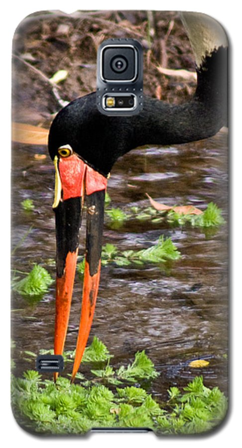 Red Galaxy S5 Case featuring the photograph Red-crowned Crane by Douglas Barnett