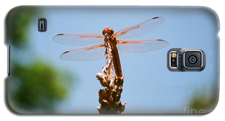Dragonfly Galaxy S5 Case featuring the photograph Red Dragonfly by Dean Triolo