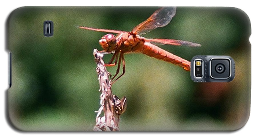 Dragonfly Galaxy S5 Case featuring the photograph Red Dragonfly II by Dean Triolo