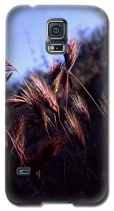 Nature Galaxy S5 Case featuring the photograph Red Feathers by Randy Oberg