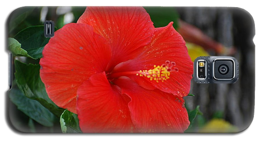 Flowers Galaxy S5 Case featuring the photograph Red Flower by Rob Hans