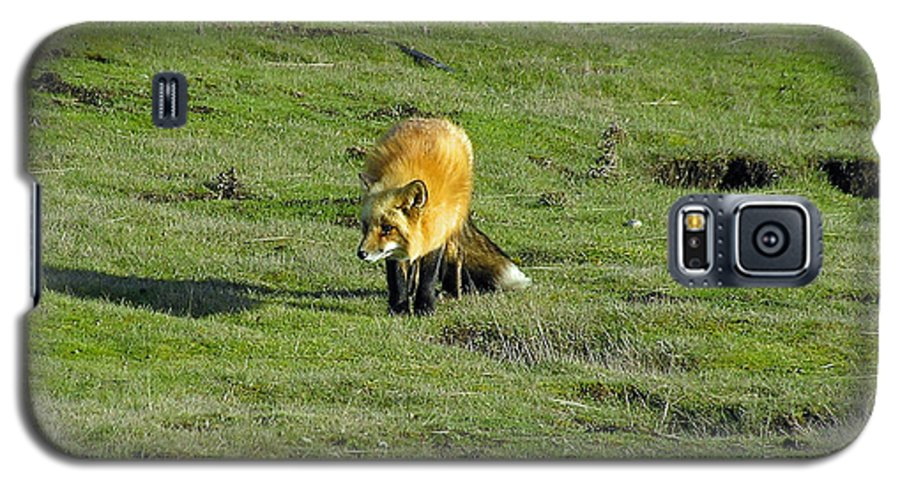 Fox Galaxy S5 Case featuring the photograph Red Fox by Louise Magno