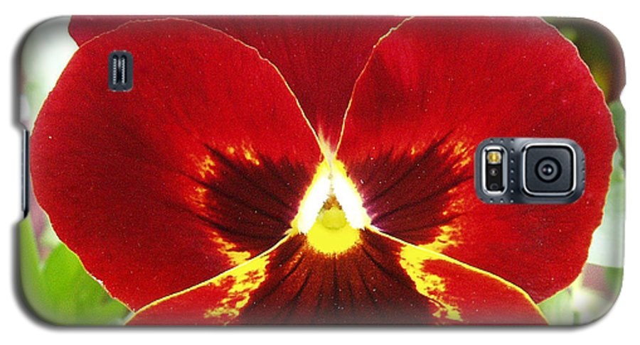 Red Galaxy S5 Case featuring the photograph Red Pansy by Nancy Mueller