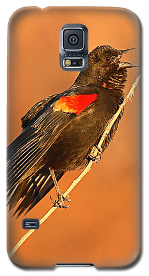 Blackbird Galaxy S5 Case featuring the photograph Red-winged Blackbird Belting Out Spring Song by Max Allen