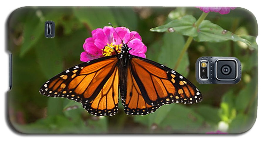 Butterfly Galaxy S5 Case featuring the painting Resting by Debbie May