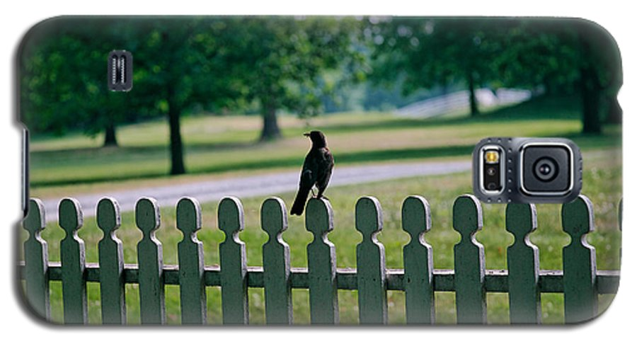Bird Galaxy S5 Case featuring the photograph Robin On A Fence by Lone Dakota Photography
