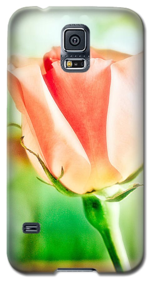 Rose Galaxy S5 Case featuring the photograph Rose In Window by Marilyn Hunt