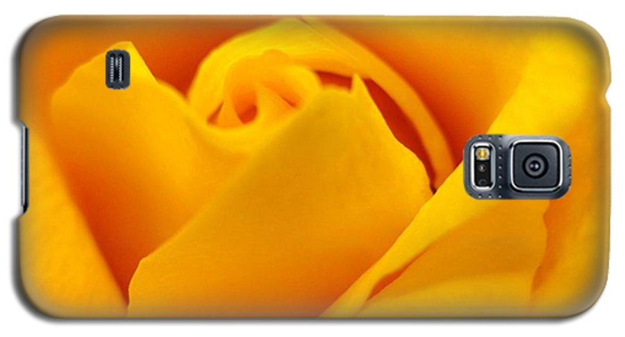 Rose Galaxy S5 Case featuring the photograph Rose Yellow by Rhonda Barrett