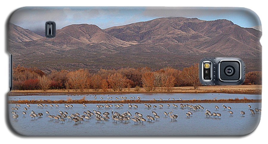 Sandhill Crane Galaxy S5 Case featuring the photograph Sandhill Cranes Beneath The Mountains Of New Mexico by Max Allen