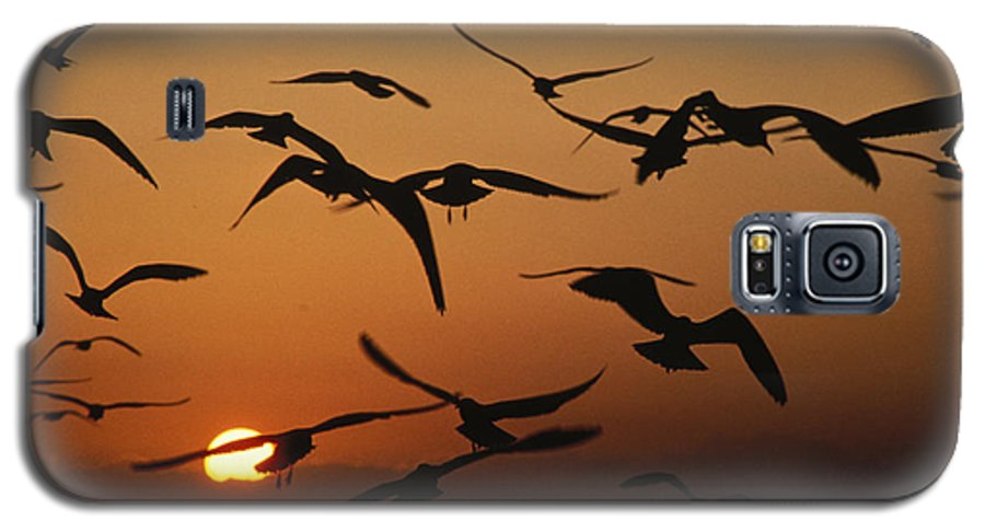 Birds Galaxy S5 Case featuring the photograph Seagulls In Sunset by Carl Purcell