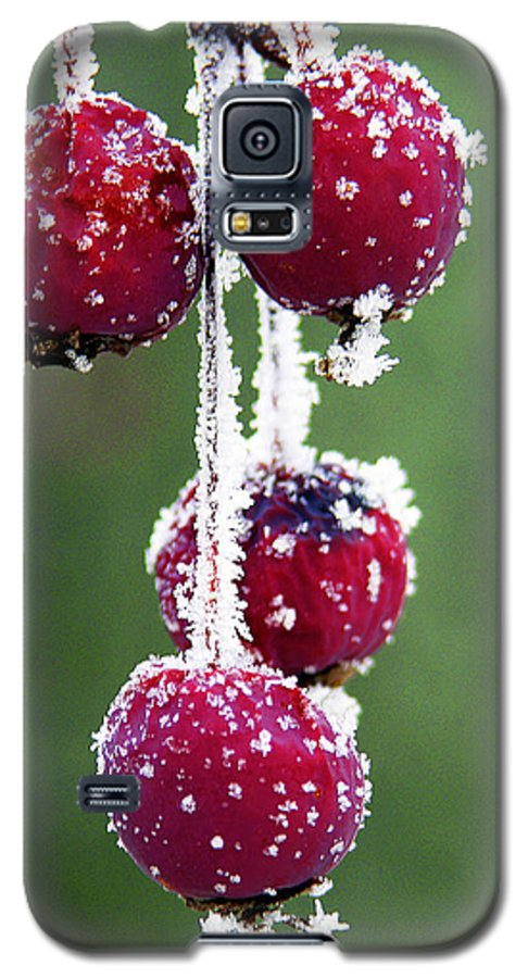 Berries Galaxy S5 Case featuring the photograph Seasonal Colors by Marilyn Hunt