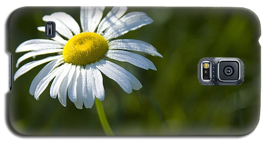 Daisy Galaxy S5 Case featuring the photograph Searching For Sunlight by Idaho Scenic Images Linda Lantzy