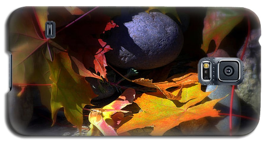 Leaves Galaxy S5 Case featuring the photograph Seed by Larry Keahey