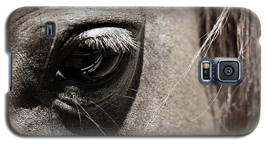Americana Galaxy S5 Case featuring the photograph Stillness In The Eye Of A Horse by Marilyn Hunt