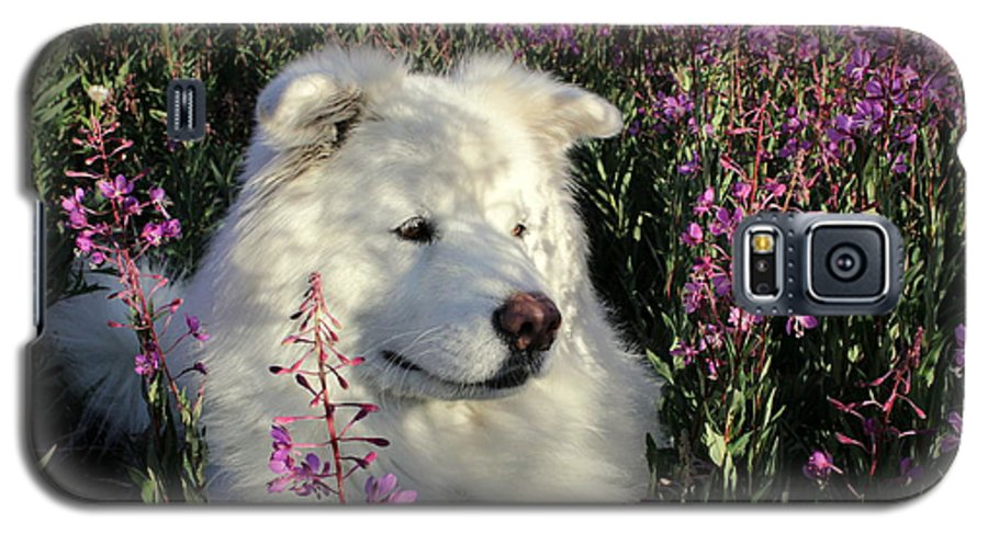 Samoyed Galaxy S5 Case featuring the photograph Shadows by Fiona Kennard
