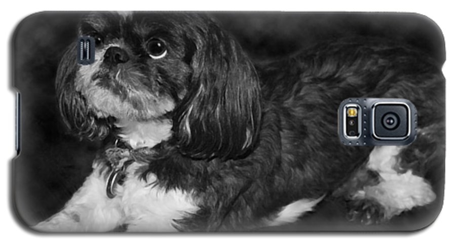 3scape Photos Galaxy S5 Case featuring the painting Shih Tzu by Adam Romanowicz